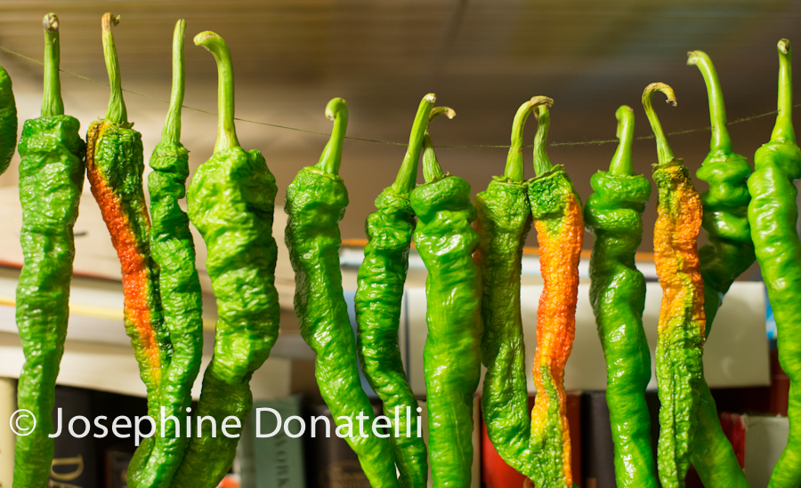 Josephine-Donatelli-Hot-Peppers-CapturedEvent.com